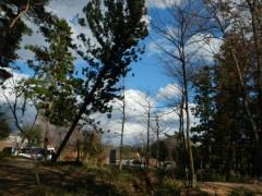 ②杉の木が倒れる瞬間