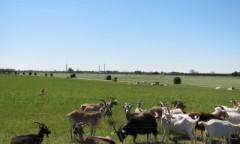デンマーク最大の有機農場クヌセンルン