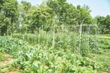 農業体験を行う自社農園