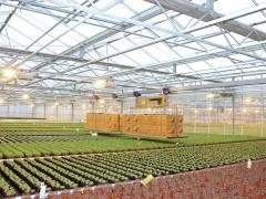 ニュルンベルクの有機野菜農園