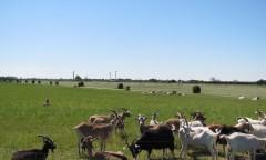 クヌセンルン農場